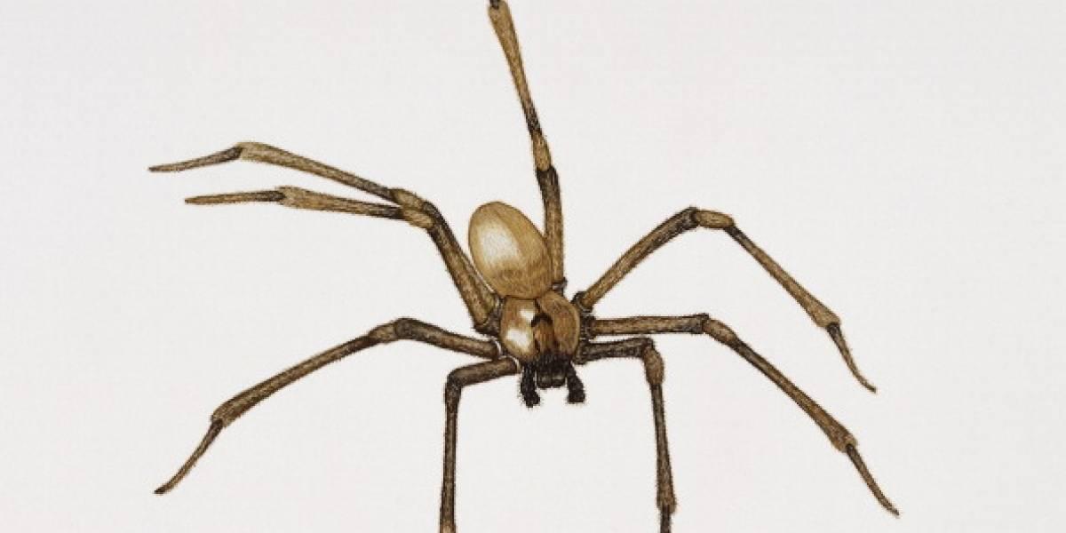 La picó esta araña: 7 cirugías y la amputación de una pierna