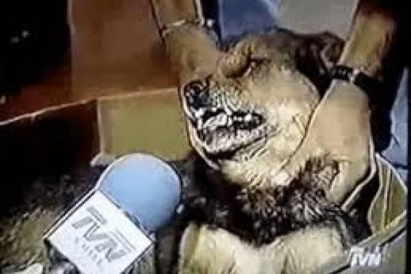perro que habla