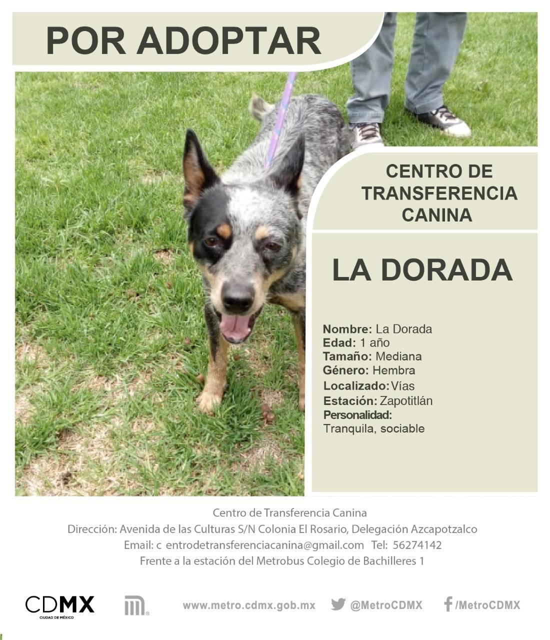 México: ¿Qué pasa con los perros que rescatan de las vías del Metro?