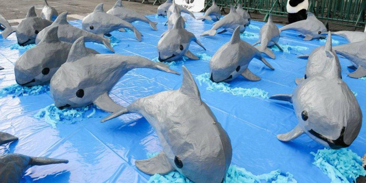 Extinción de la vaquita marina significaría el triunfo del crimen organizado