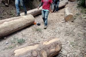 allanamientos por comercio ilegal de madera