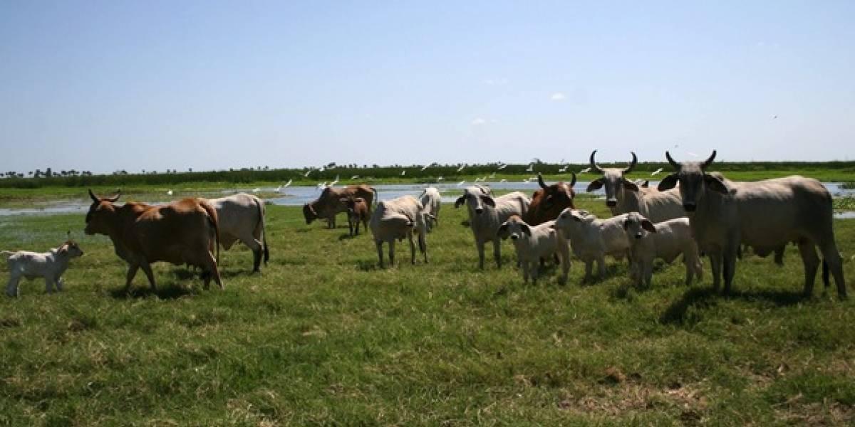 Estas son las 32 sustancias prohibidas para engorda de ganado