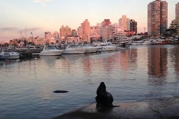 Una mujer y su hija murieron este martes a la noche al caer desde un piso 21 de un edificio en Punta del Este, Uruguay.