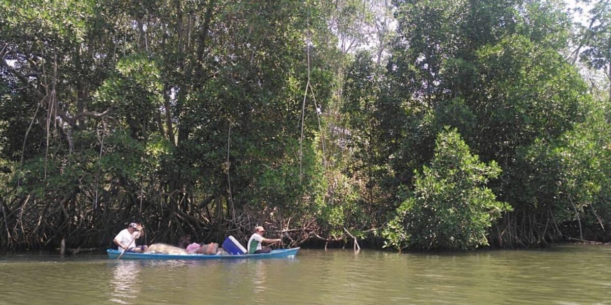 Instan a defender la riqueza del mangle en Guatemala