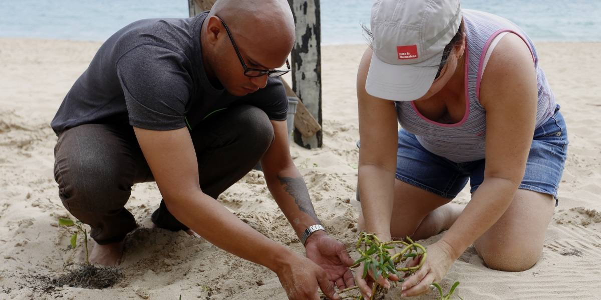 Organizaciones sin fines de lucro se unen para reforestar costas y rehabilitar dunas