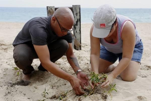 El intérprete ambiental Daniel Montenegro lidera un grupo de voluntarios de la rama judicial de Carolina y del Senado entre otros a la siembra de árboles nativos en la playa de Ocean Park.