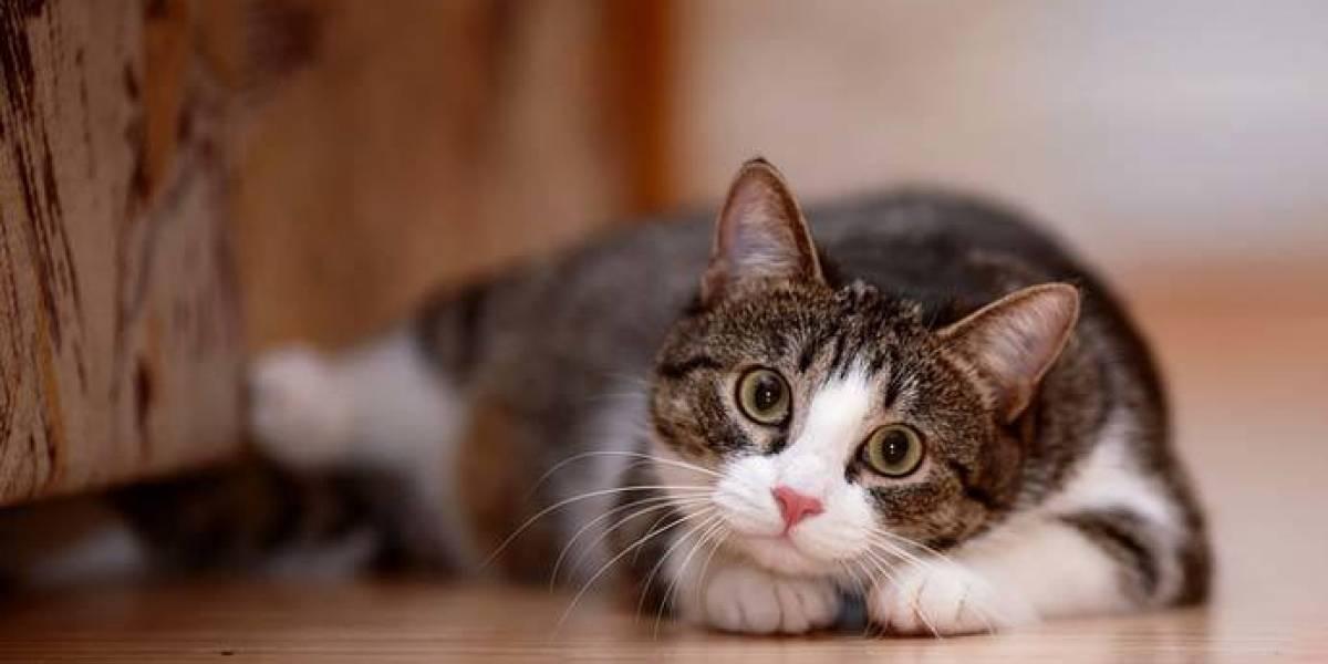 Peruano se convierte en viral por particular firma que tiene en su cédula de identidad: el dibujo de un gatito