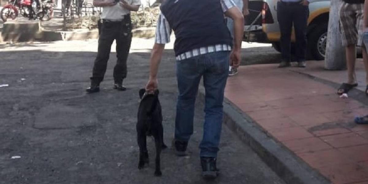Sanción económica para quien deje a sus mascotas sueltas en las calles