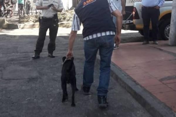 perros mascotas sin collar quito