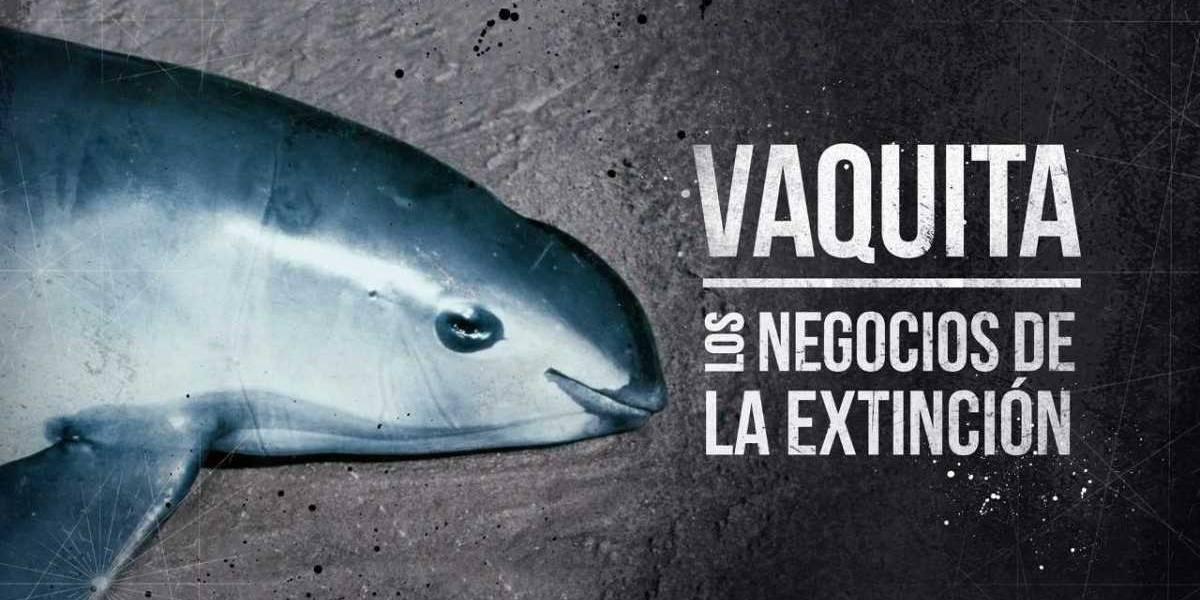 Extinción de la vaquita marina significaría el triunfo del crimen organizado, asegura experto
