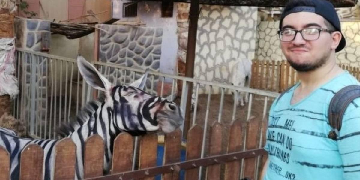 Zoológico egípcio é acusado de pintar burro para parecer zebra