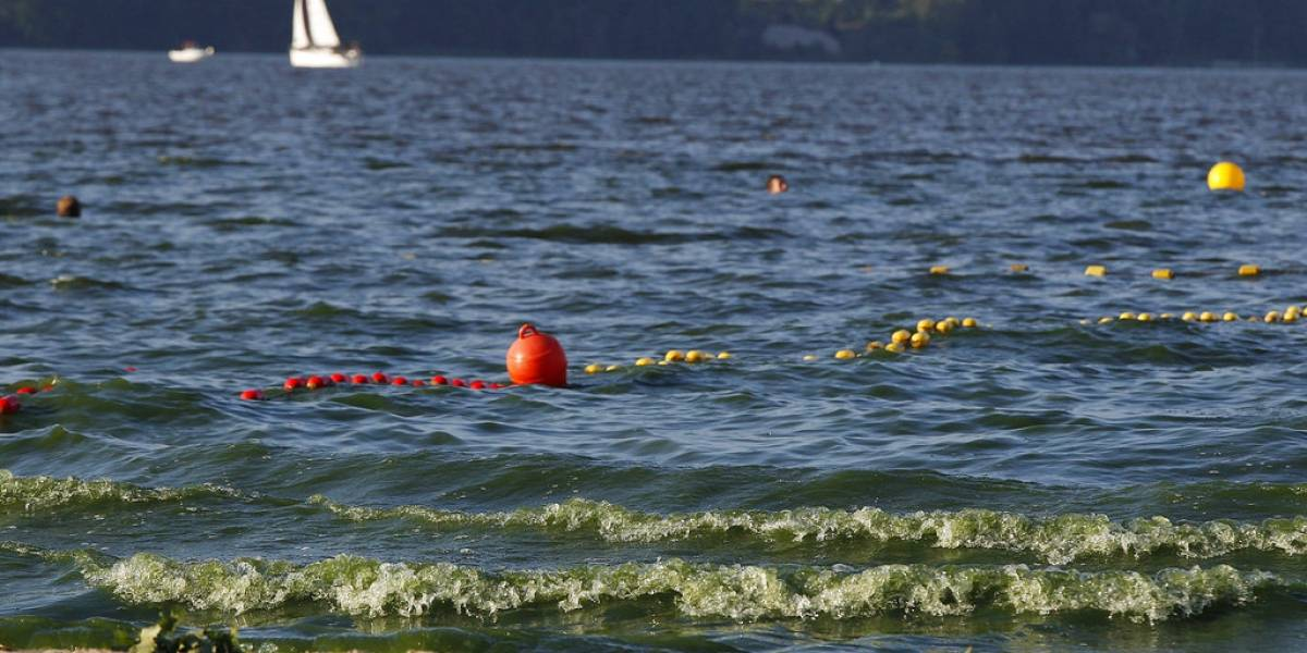 La peligrosa bacteria verde que invadió las costas de Polonia por culpa del aumento de la temperatura en el mar