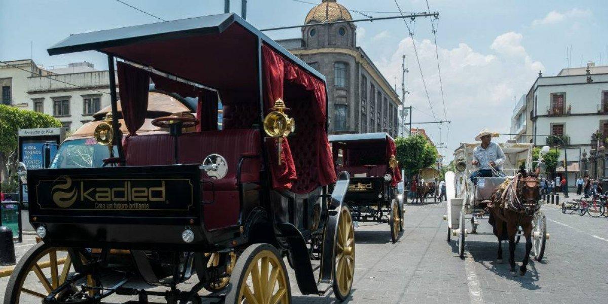 Guadalajara no quiere más explotación de caballos en calandrias