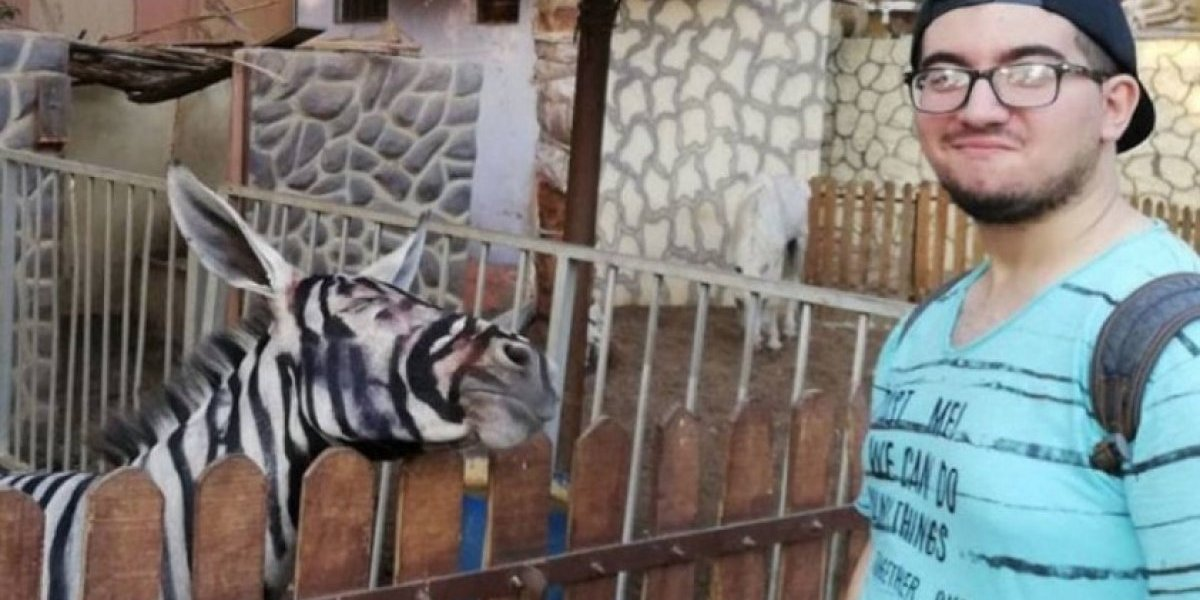 ¿Cebras?: zoológico niega haber pintado rayas a un grupo de burros para engañar a sus visitantes