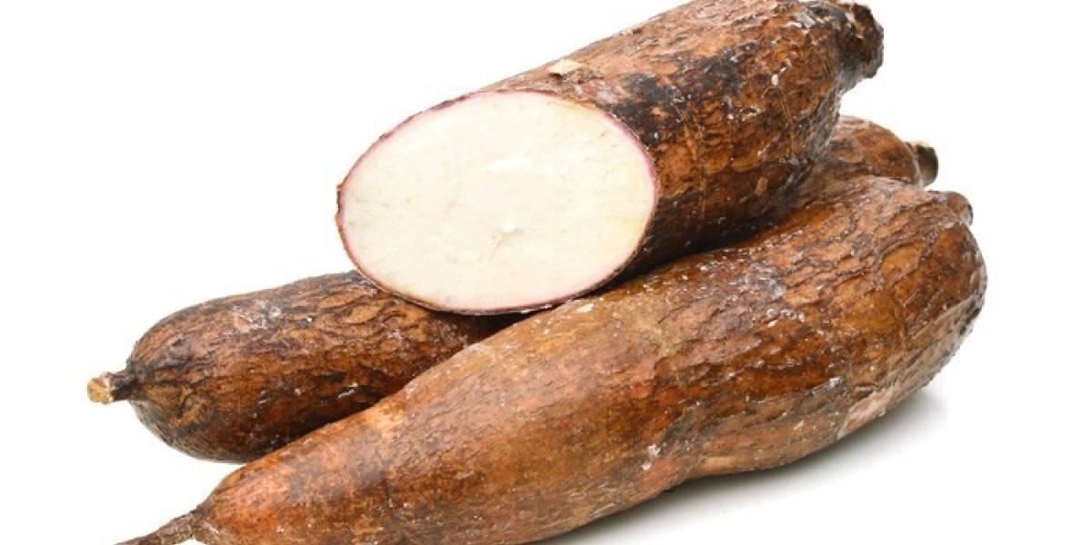 Diseñan en Colombia platos biodegrabables hechos a partir de yuca