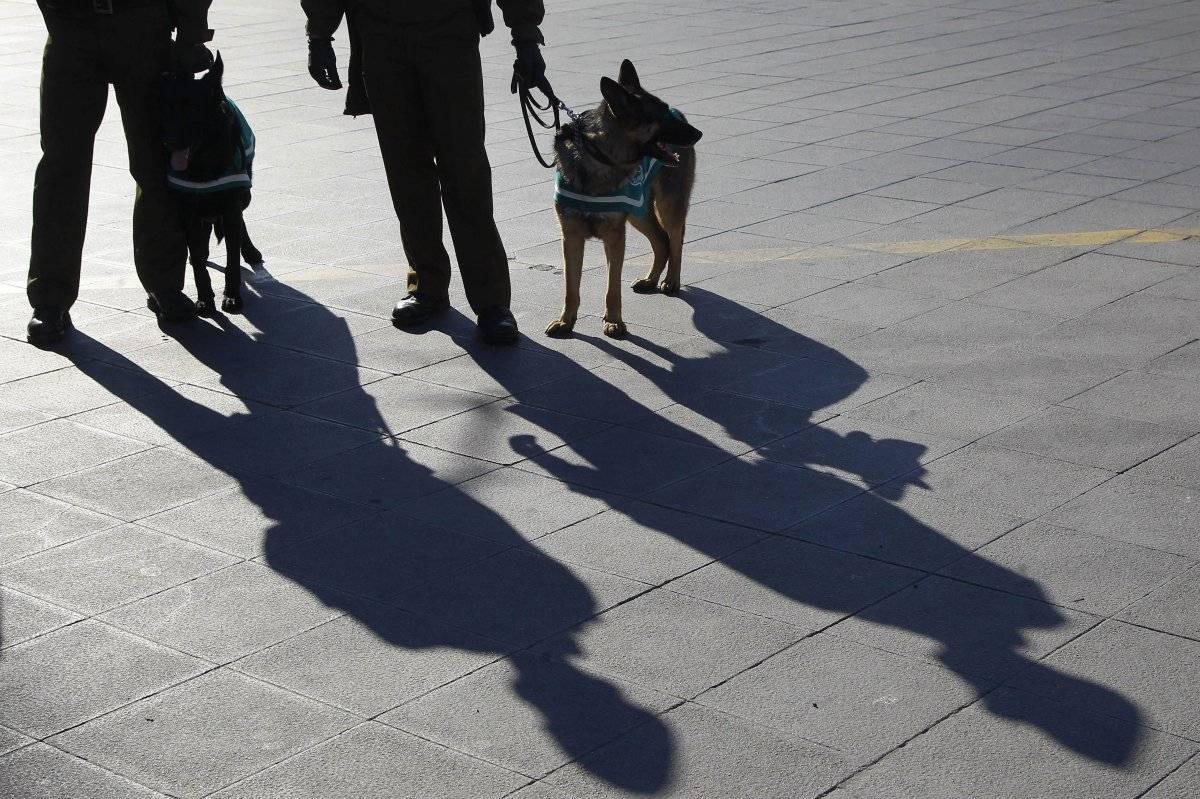 perros para detectar cáncer de próstata