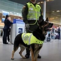 Sombra perro policía