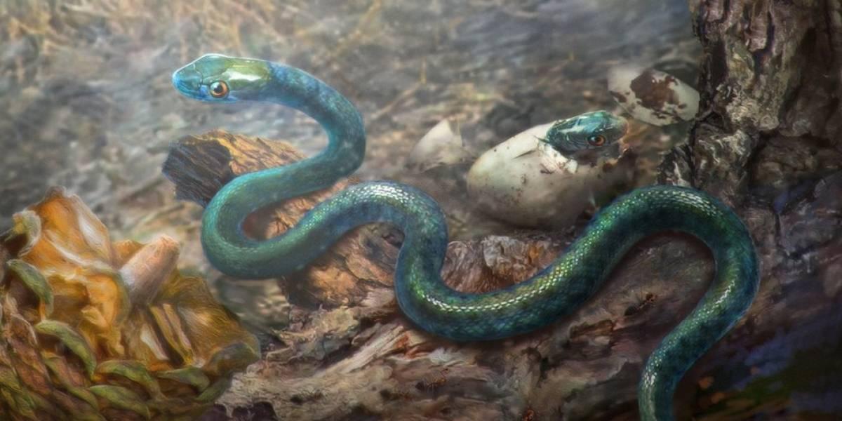 """A cobra bebê """"congelada no tempo"""" por 99 milhões de anos que traz novas pistas do passado"""