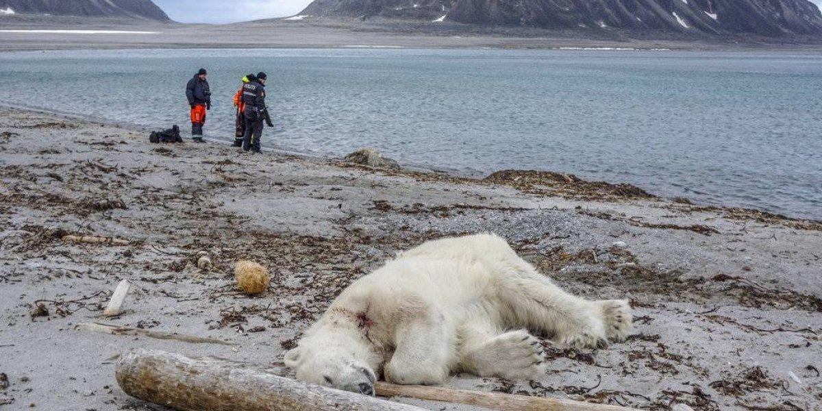 Autoridades de Noruega justifican matanza de oso polar