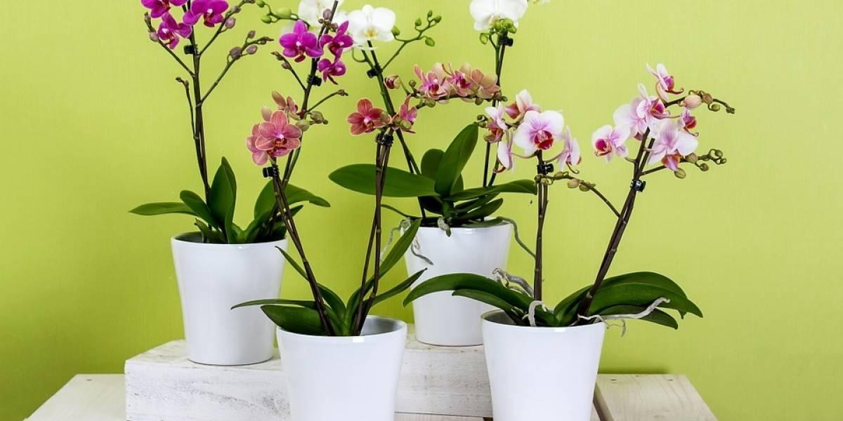 Cresce a procura e o número de lojas de plantas na Santa Cecília e Vila Buarque