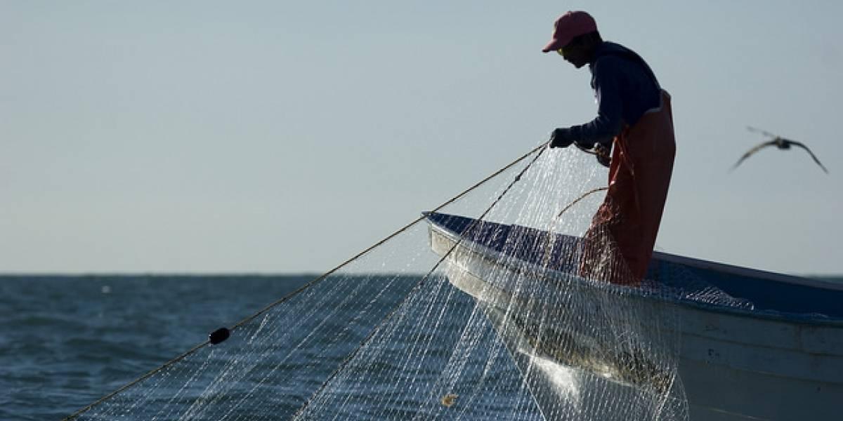 México en problemas: EE.UU ya no recibirá sus productos marinos por  extinción de la vaquita marina