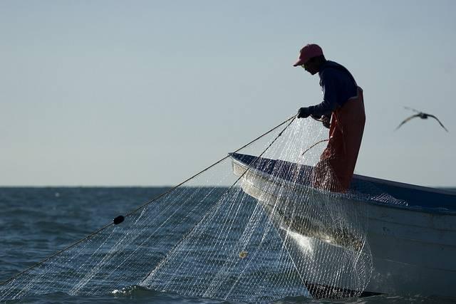 México en problemas: EEUU ya no recibirá sus productos marinos por extinción de la vaquita marina