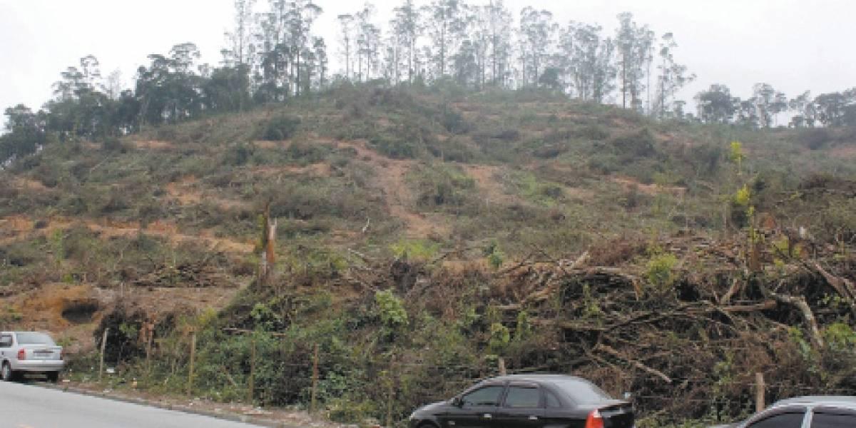 ABC perde área verde de 12 campos de futebol; desmate foi autorizado pela Cetesb