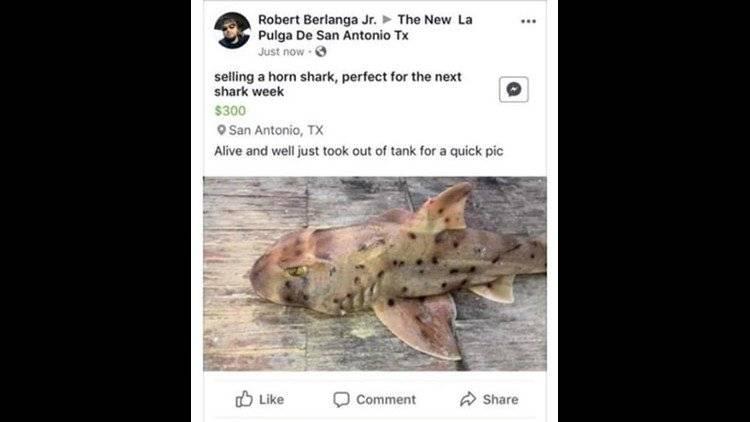 venta de tiburón