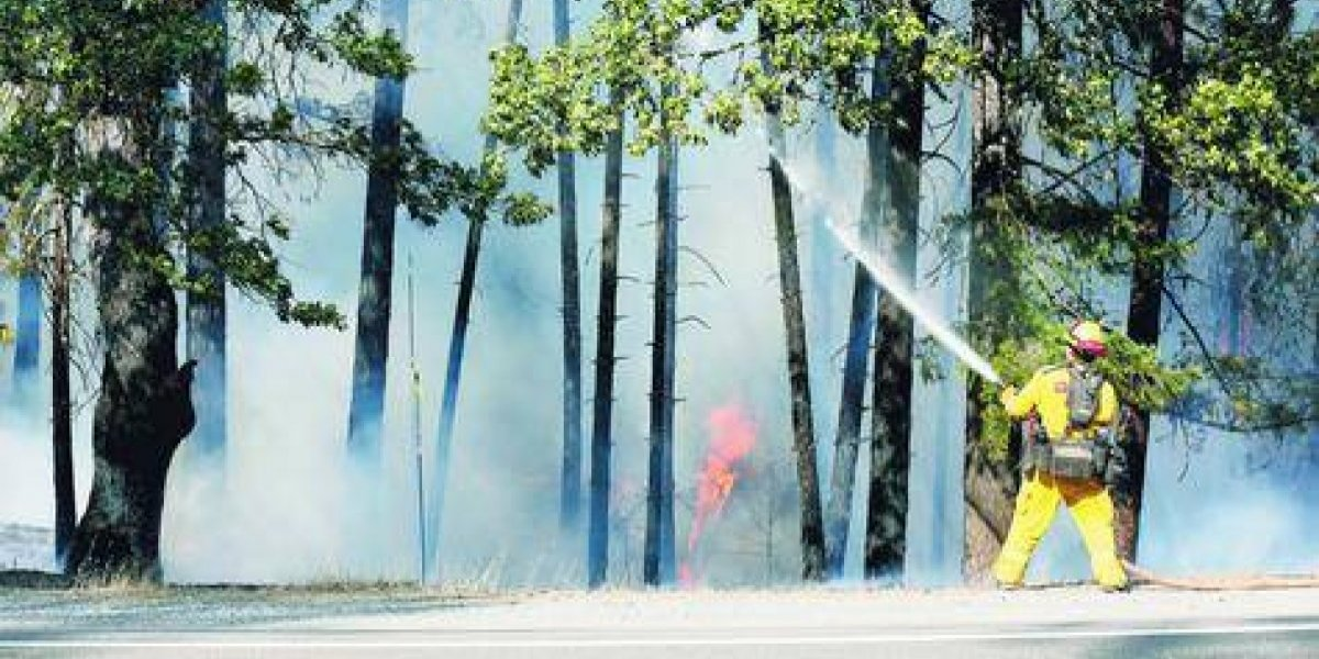 Inusuales incendios forestales se desatan en todo el mundo