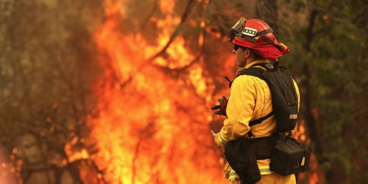Inusuales incendios forestales rabian en todo el mundo