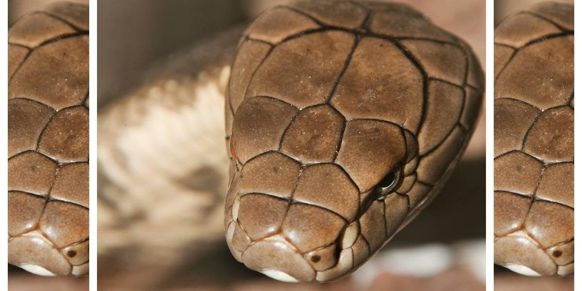 Torturan con una serpiente a detenido para que confiese delito