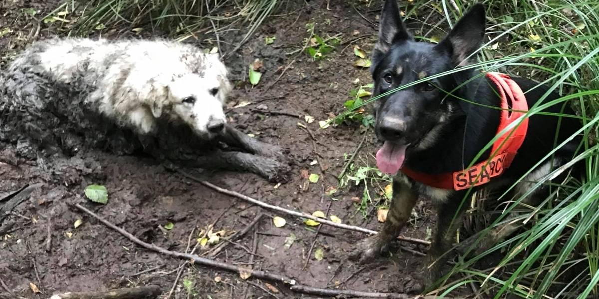 Tino es todo un héroe perruno: en su primera misión rescató a otro can que quedó atrapado en el barro por dos días