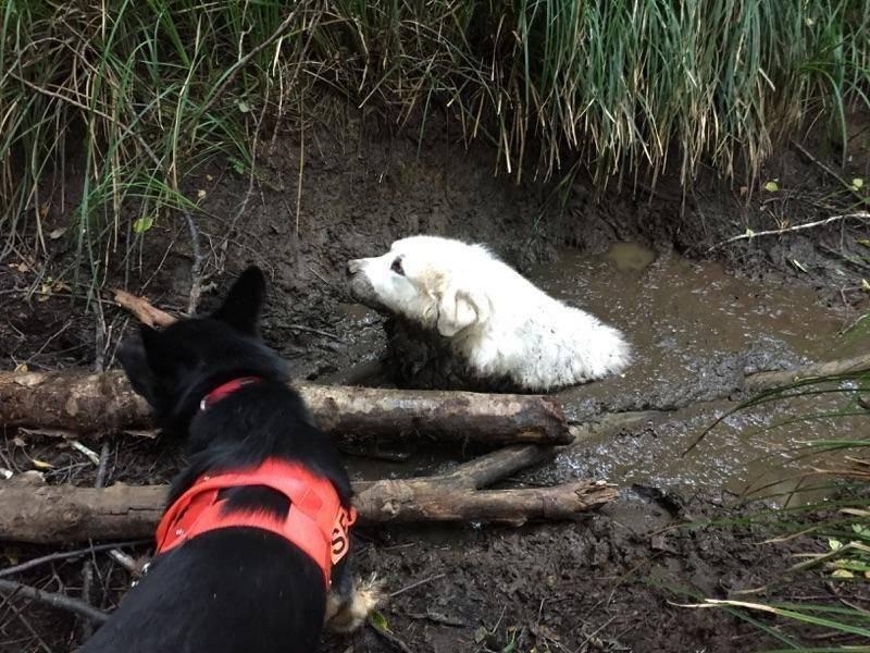 perro primer rescate