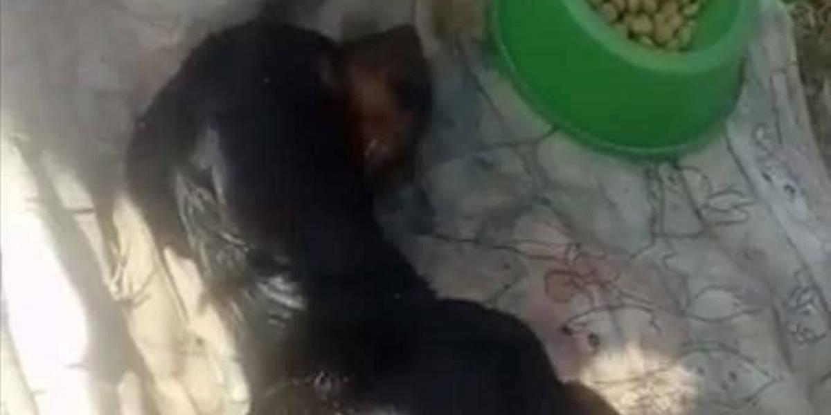 Cachorro morre após ser enterrado vivo em praia do Rio