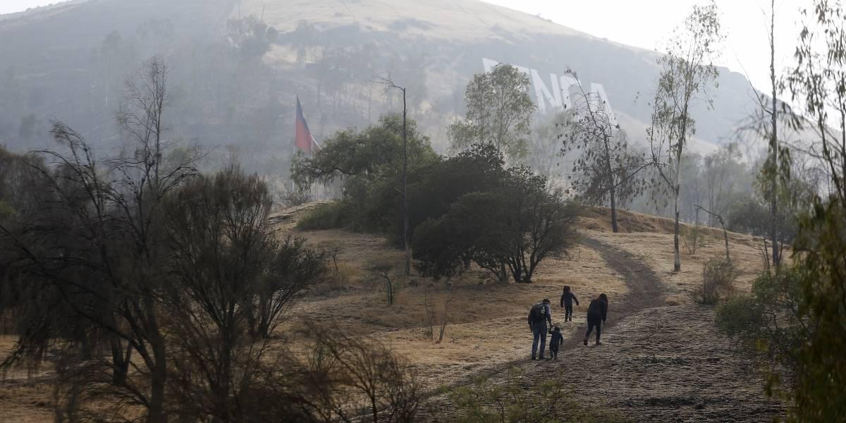 Renca: Este fin de semana voluntarios reforestarán el icónico cerro de la comuna