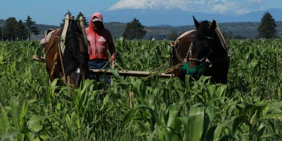 Legisladores de Guerrero envían iniciativa al Senado para legalizar la amapola