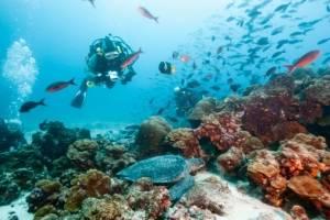 islasgalapagos8-73ee82c9b81ebed90fdbf8323aa1685a.jpg