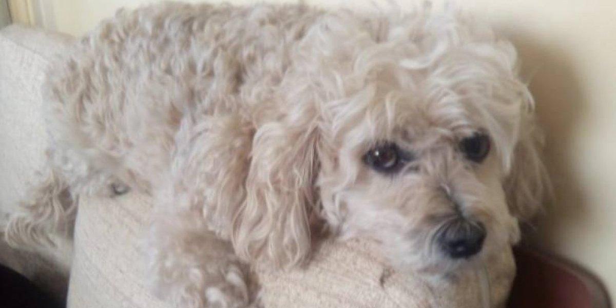 Todo por su mascota: ofrece como recompensa su auto a quien le pueda devolver a su perrito perdido