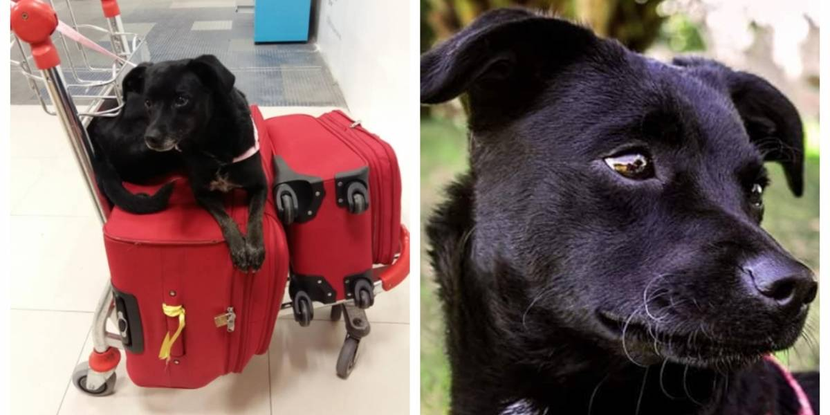"""Ha sido una experiencia realmente traumática"": acusa a aerolínea de perder a su amada mascota e inicia una desesperada búsqueda para localizarla"