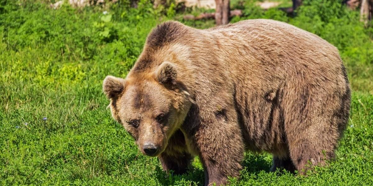 Homem é multado por alimentar ursos três vezes nos últimos oito anos nos EUA
