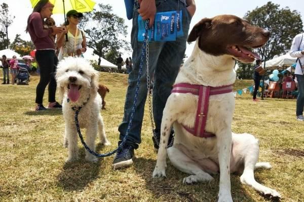 inauguración del segundo Parque de Perros Bogotá