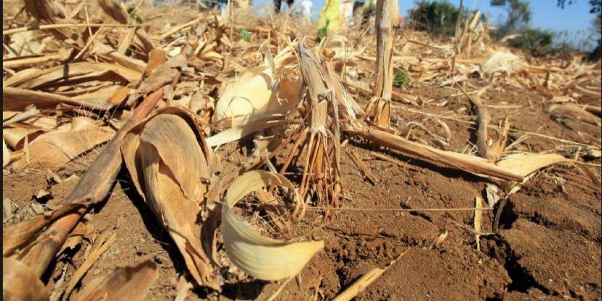 Proyecto busca reforestar Corredor Seco de América Central y áreas de República Dominicana