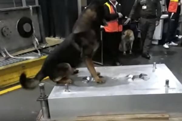 Sombra, la perra antinarcóticos amenazada