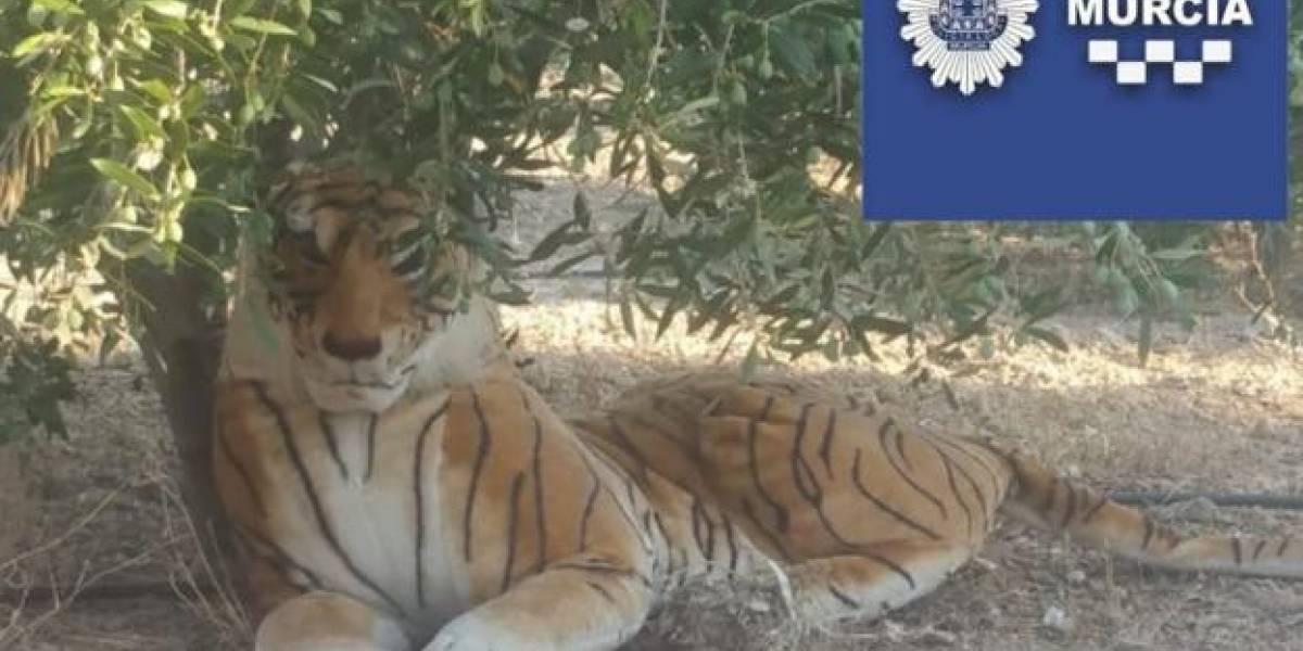 """""""De lejos parecía un animal"""": vecino alerta a la policía por un tigre y vuelve con uno de peluche"""