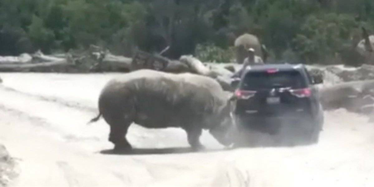 Vídeo: Rinoceronte ataca veículo e turistas vivem momentos de terror