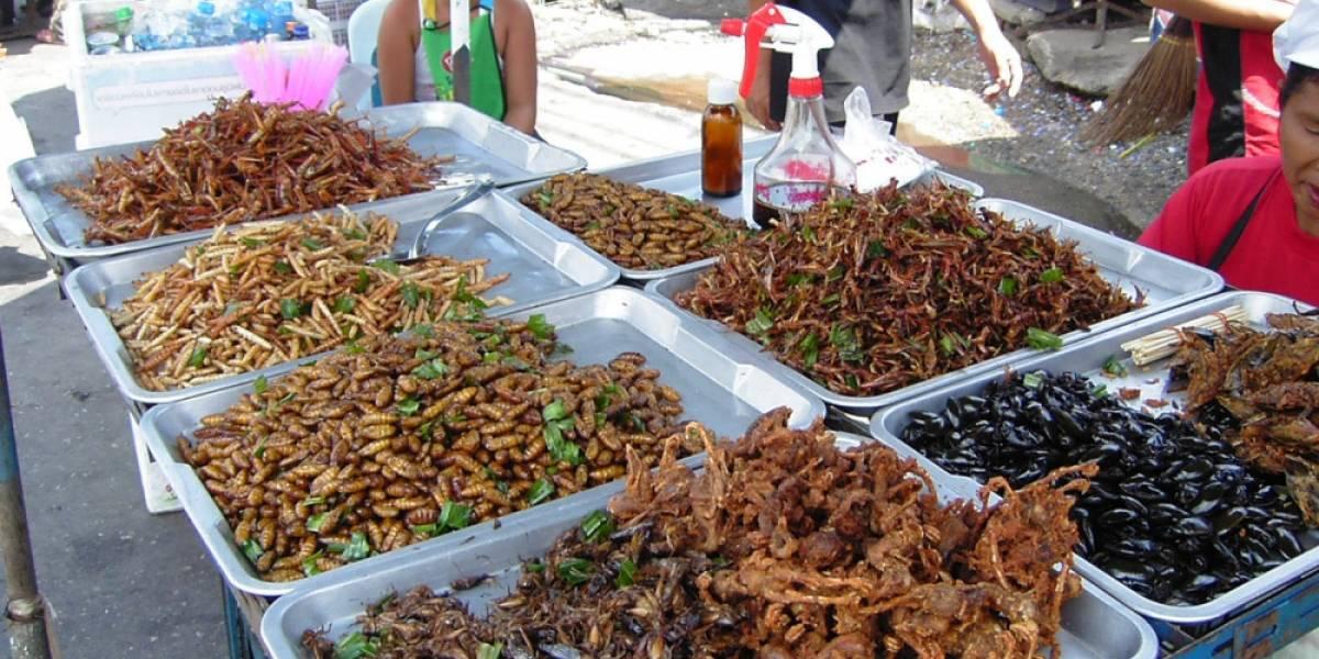 Un estudio clínico asegura que comer insectos puede ser bueno para la salud