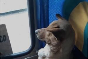 VIDEO: El gesto de un conductor hacia un perro callejero que subió a su autobús conmueve las redes