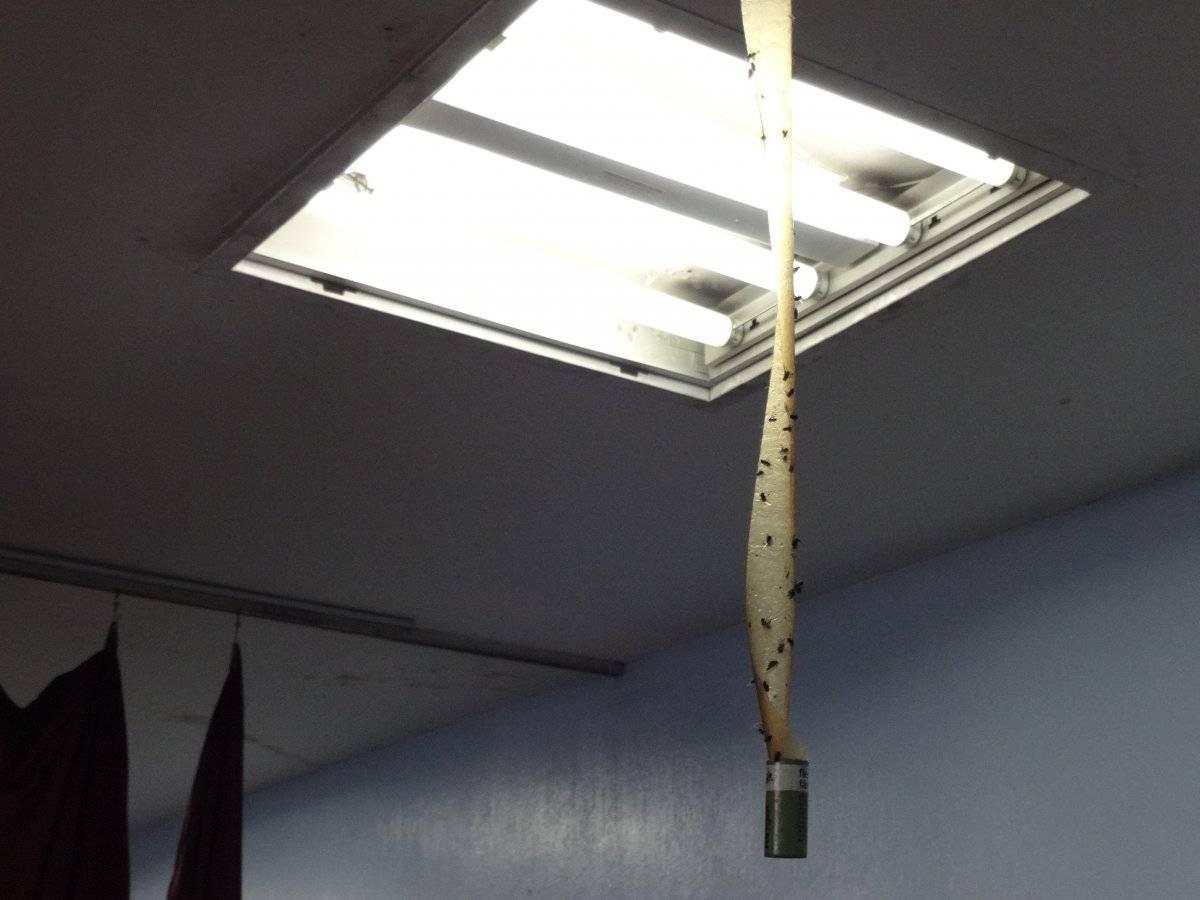 Se colocaron cintas para atrapar moscas en el área de emergencia de adultos. Foto: Jerson Ramos