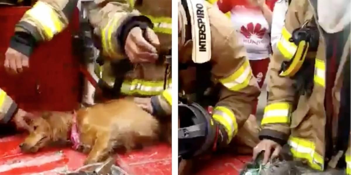Video: Bomberos salvan la vida a dos perritos atrapados en un incendio en Bogotá