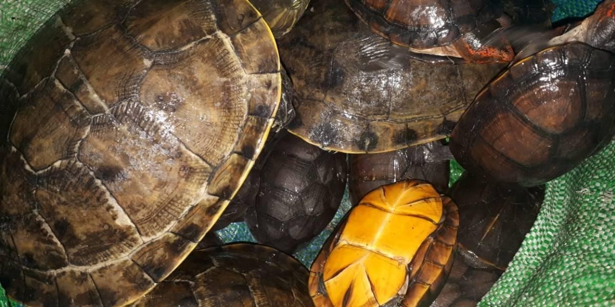 PNC rescata a animales en peligro de extinción que serían comercializados